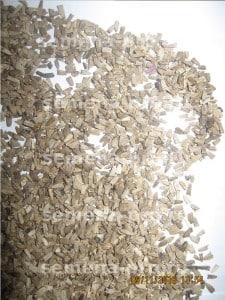 Семена эхинацеи крупным планом