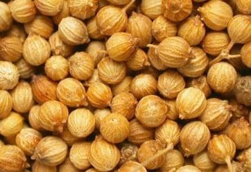 Семена кориандра из Канады