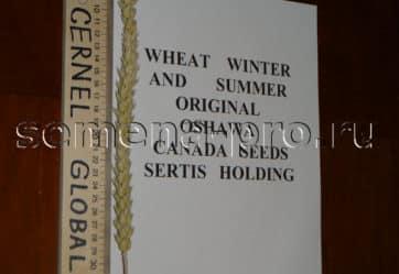 Пшеница двуручка